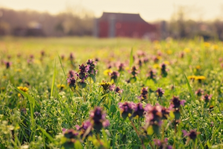 blissful: Colorful lawn on the farm Stock Photo