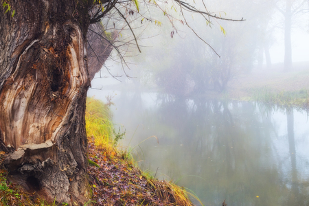 river trunk: Old tree trunk on the shore of foggy river