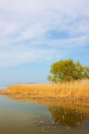 triplet: Shore of Lake Balaton with green tree surrounded by reed