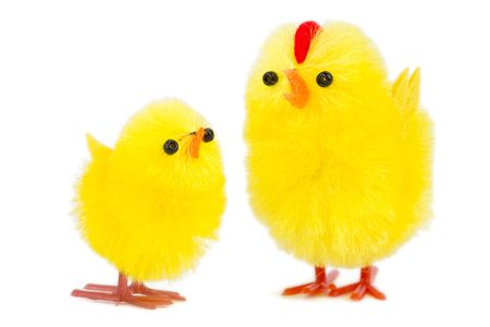 daddy chick and baby chick, isolated on white background Stock Photo