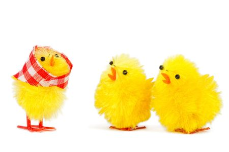 mam: mommy chick and two sons, isolated on white background Stock Photo