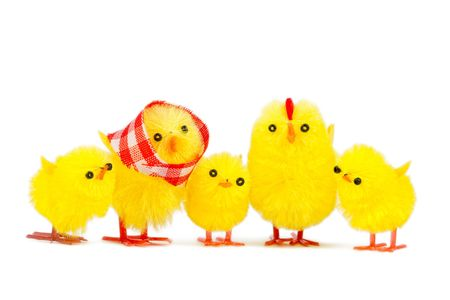 chick family, isolated on white background photo