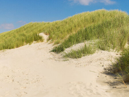 idylle: Duene mit Duenengras im Sommer bei blauem Himmel