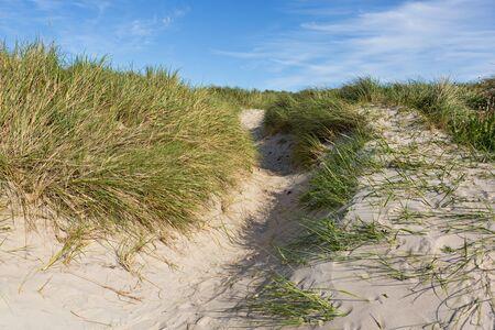 dunes: Way in the dunes