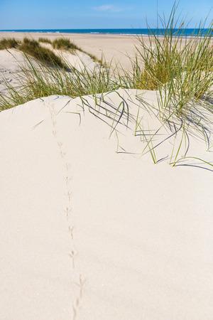 vogelspuren: Verfolgen Sie in den Sand Sandpiper