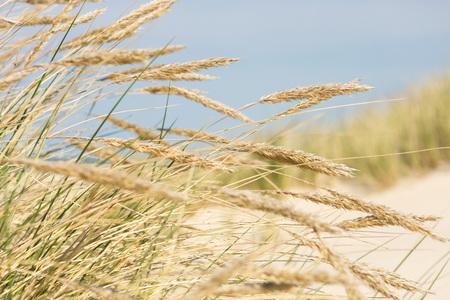 Sunny beach grass Stock Photo