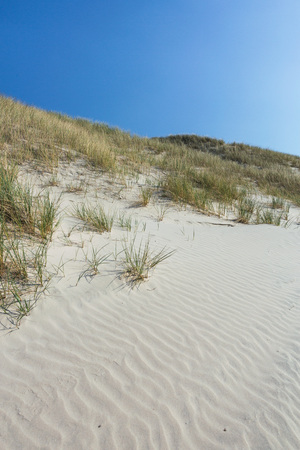 Dunes with beach grass against blue sky