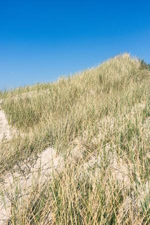 Sea grass against a blue sky Stockfoto