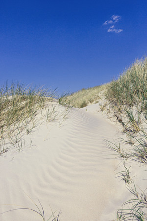 Beautiful dunes with beach grass in the summer