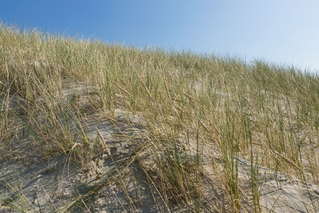 Sea grass against a blue sky Stock Photo
