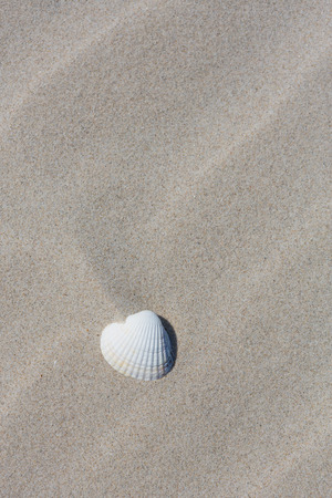 One sea shell with sand Stock Photo