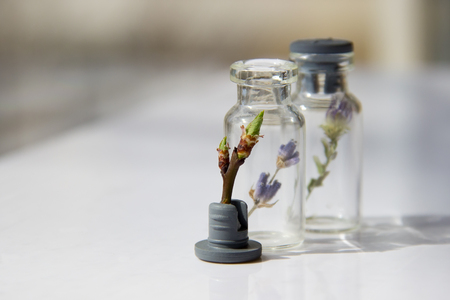 The living plant are in front of a glass bottle with plants on a white table.