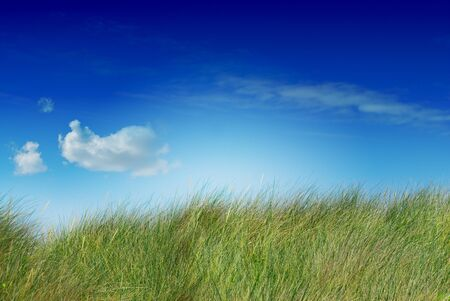 tall grass: tall green grass blue sky and one cloud the image is saturated, the cloud is on the left side, the grass is uncutted