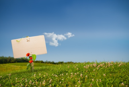 wooden sign on the left side of a green land with a blue sky, with one cloud, image is horizontal photo