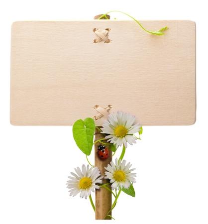 letreros: madera signo verde sobre un fondo blanco con margaritas y ladybird hojas Mariquita y verde es el puesto del titular