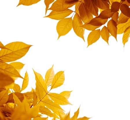 fall leaves on white: autumn leaves over white background. leaf border with yellow, orange, brown colors Stock Photo