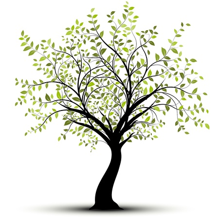 branch tree: Green tree over white background