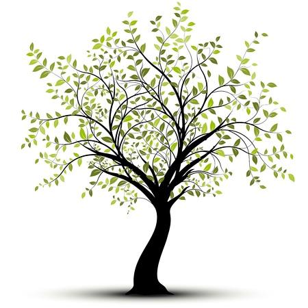 bomen zwart wit: Groene boom op een witte achtergrond Stock Illustratie