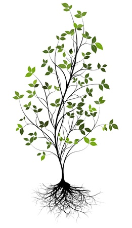 gree, vector tree and root Vector