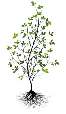 baum pflanzen: Gree, Vektor-Baum und Wurzel Illustration
