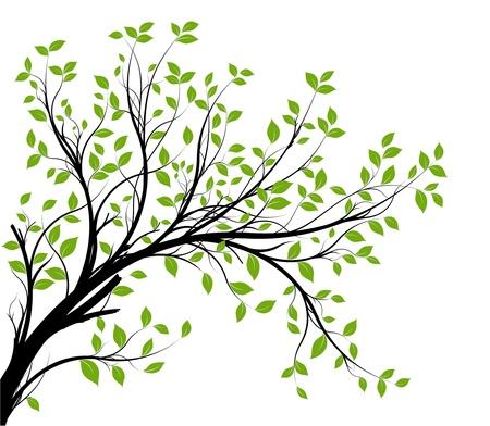 bladeren: vector - decoratieve tak silhouet en groene bladeren, witte achtergrond