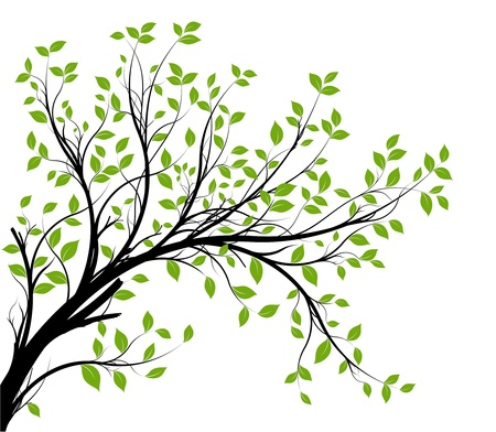 green trees: vector - decorative branch silhouette and green leaves, white background