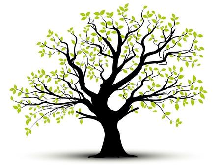 arbol de la vida: conjunto de vectores - árbol decorativo y hojas verdes con sombra