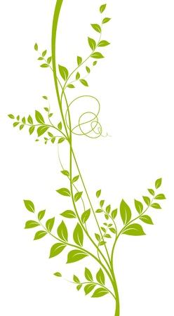 ベクトルの装飾的な要素緑白色の背景上の葉を持つつる植物