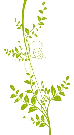 vector decorative element  Green liana with leaves over a white background Illustration