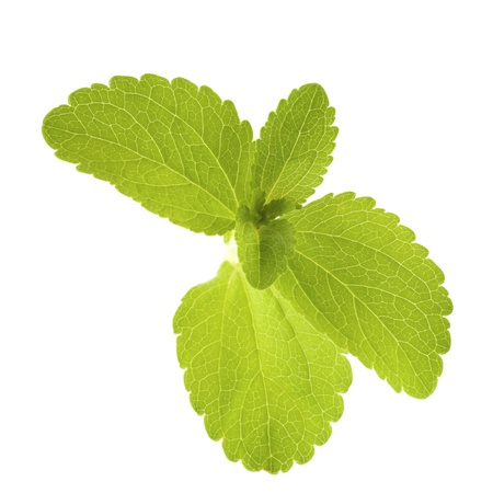 sweetening: stevia rebaudiana leaves isolated over white background