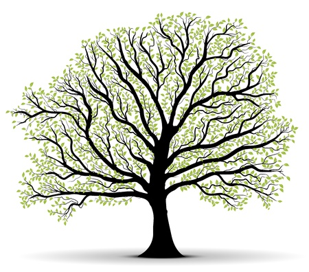 drawing trees: big vector tree silhouette with green foliage over white background, black trunk, lot of leaves