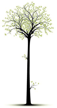 적합: 벡터 키가 큰 나무는 녹색 단풍 andblack 트리 화이트 이상 격리입니다. 스티커 등 장식 요소에 적합한 실루엣