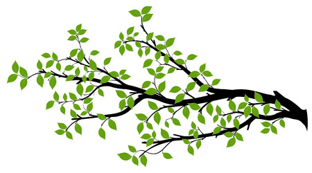 Tree branch with green leaves over white background. Vector graphics. Artwork design element. 矢量图像