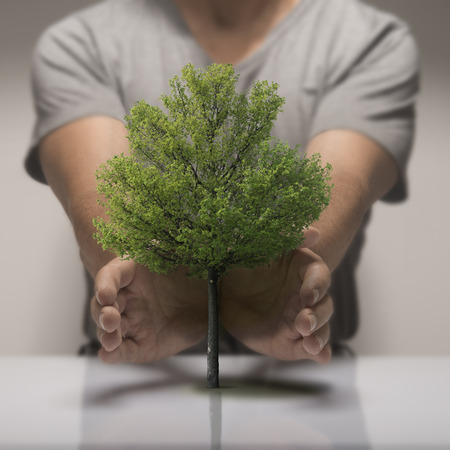 nurseryman: Two hands around a small tree, symbol of ecology or environmental protection. Stock Photo
