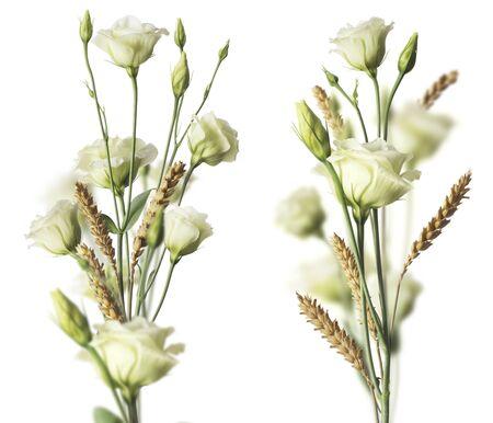 rosas blancas: Dos rosas blancas y ramos weat con efecto blurr. Imagen sobre fondo blanco