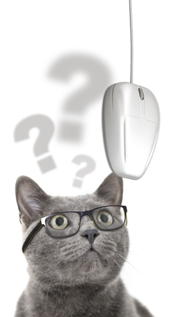 Cat with glasses looking at computer mouse over white background. Reklamní fotografie