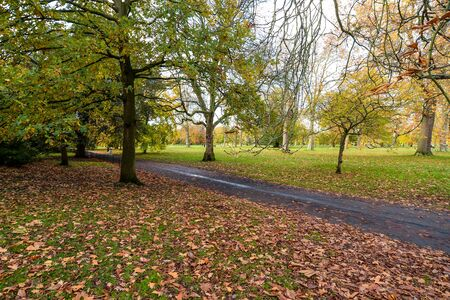 London/UK - 11/11/19 - Brightly colors and people enjoying autumn in Hyde Park Stock Photo