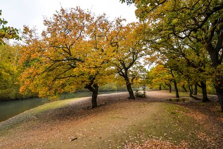 London/UK - 11/11/19 - Brightly colors in Epping Forest - London