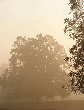 Trees in meadow in soft morning fog light Stock Photo