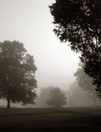 soft diffused light: Trees in meadow in soft morning fog light Stock Photo