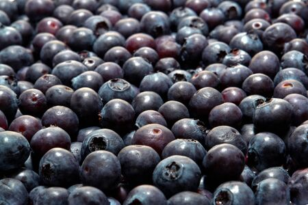 Blueberry galore with an abundance of fresh organic blueberries on a market display