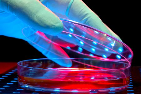 scientific: Scientist hand over petri dishes for an experiment in a science research lab