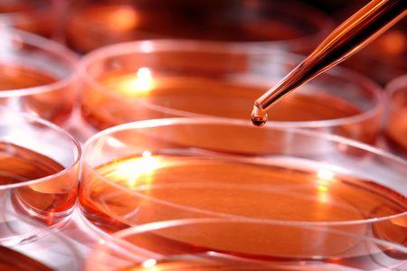 ペトリ皿科学研究室で実験のために液体の滴とピペットします。 写真素材