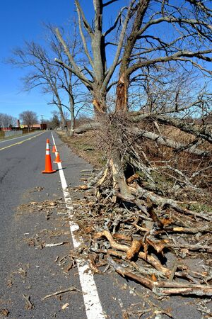 Damaged fallen tree branch with safety traffic cones on a rural road after a strong storm Stock Photo - 6870444