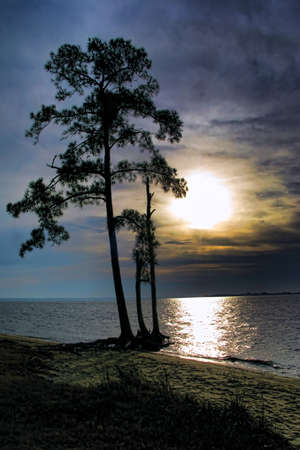 Moonlight over a wide river with silhouetted pine tree on a beach