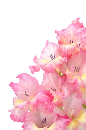 perianth: Pink gladiolus flowers bouquet isolated on white  Stock Photo