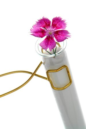 genetically engineered: Fresh flower inside a science research laboratory test tube filled with thick solution as a metaphor for a scientific experiment with genetically engineered flora