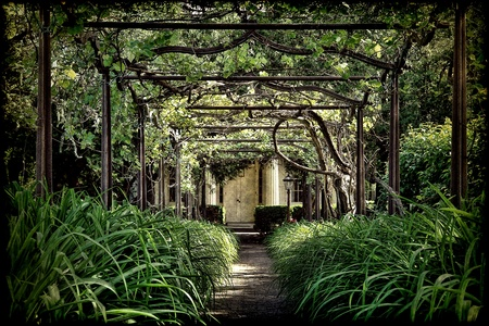 Antique pergola arbor over aged brick alley with lush overgrown green vegetation and old rusty steel lattice arches in a historic home garden