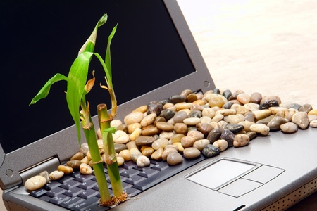 obsolescence: Bamboo stems growing out of an obsolete abandoned laptop computer partially covered with discarded pebbles Stock Photo