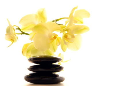 White orchid flowers over black hot massage polished stones Zen cairn in a spa Stock Photo